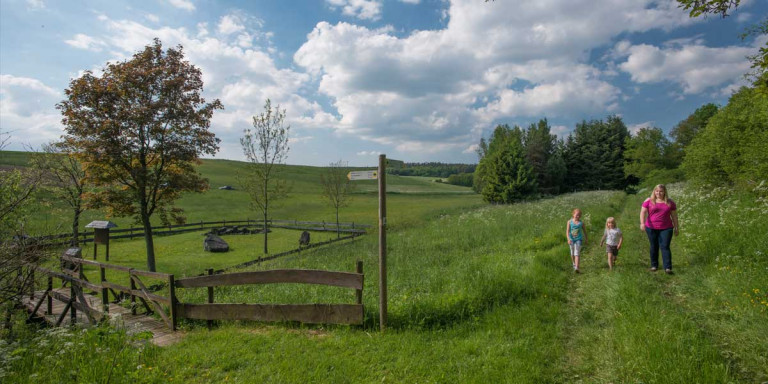 Bodenbacher Drees © Natur- und Geopark Vulkaneifel GmbH, Kappest