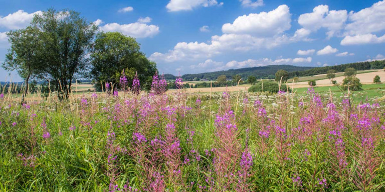 Umgebung des Schulldrees © Natur- und Geopark Vulkaneifel GmbH, Kappest