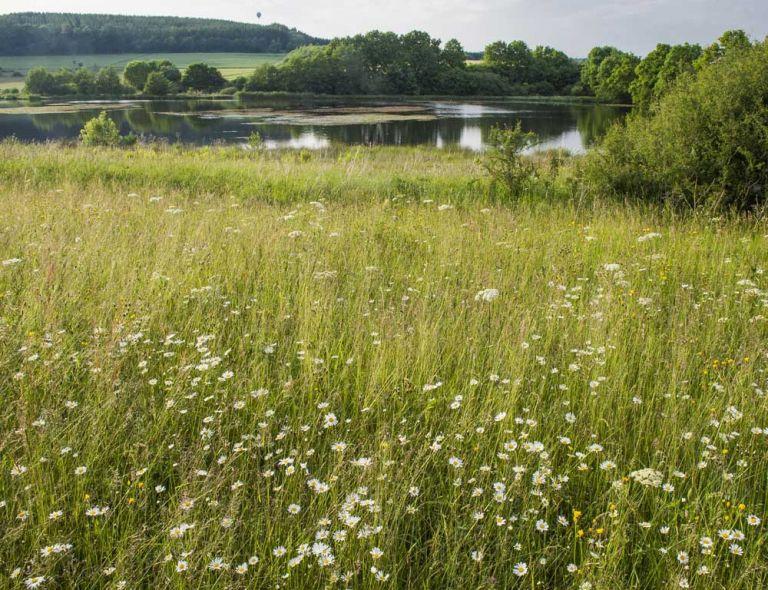 Seenwiesen